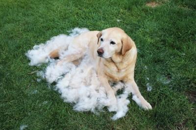 抜け毛に覆われた犬