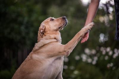 人の腕に片手を伸ばす大型犬