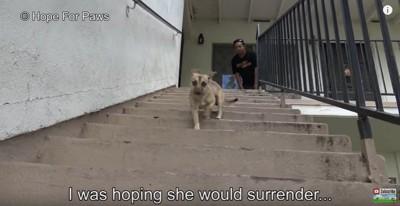 階段を下りる犬