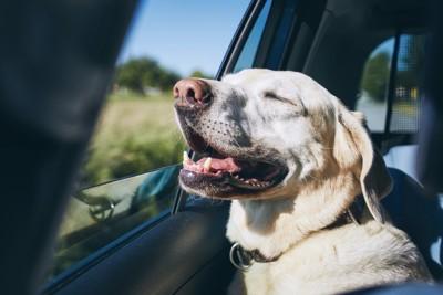 車内で少し暑そうにしている犬