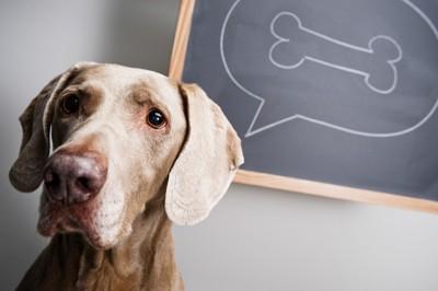 骨のイラストが描かれている黒板と悲しい表情をしている犬