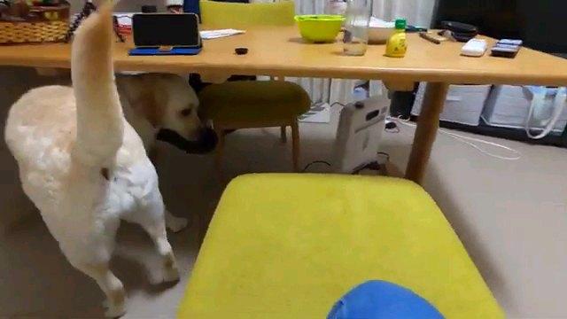 後ろ向く犬
