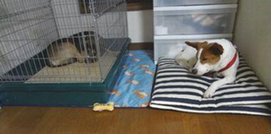 2匹並んで1匹はケージの中の犬達