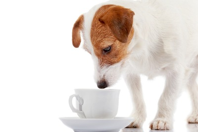コップに近づく犬