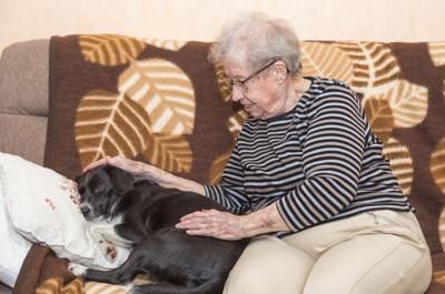 老人と老犬