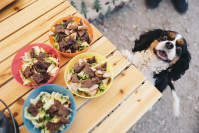 テーブルの上の食事を見る犬