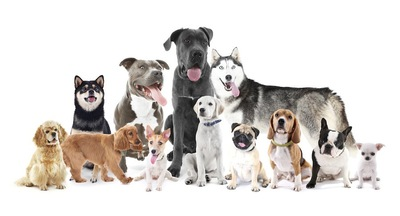 様々な大きさの犬種のグループ