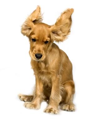 毛が逆立つ犬