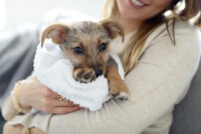 犬をタオルで拭く人