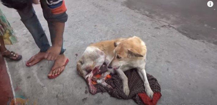 足に深い傷を負った母犬