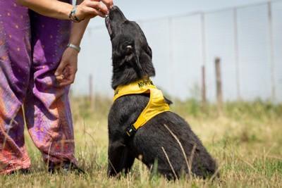 トレーニング中の保護犬
