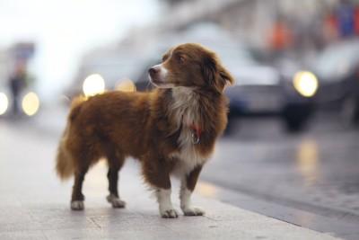 尻尾を下げて街を彷徨う犬