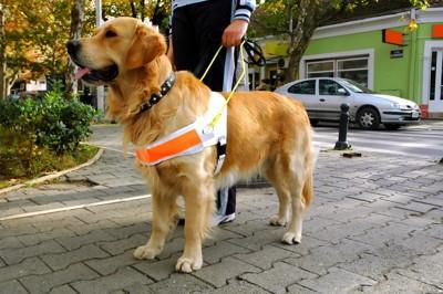 盲導犬と赤いパンツの人