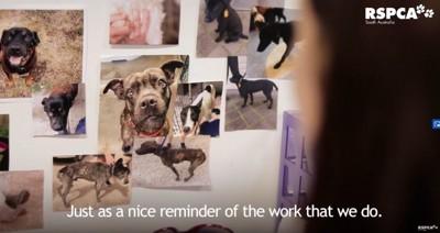 壁に貼った犬の写真