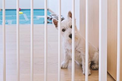 柵からのぞく犬