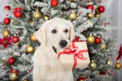プレゼントの箱をくわえている犬