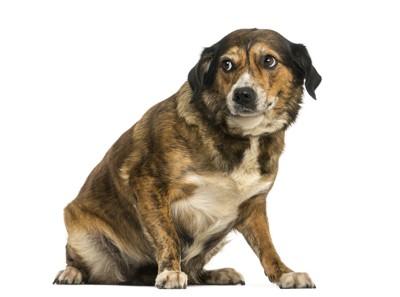 怯えたような表情で座っている犬