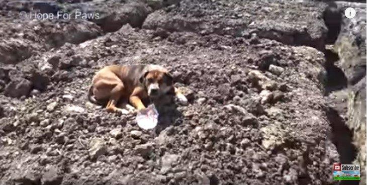 地面に伏せる犬