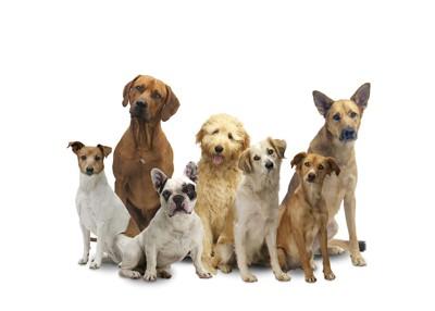 座って集まる七頭のハウンド系犬種たち