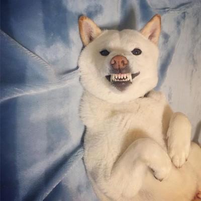 歯を見せる
