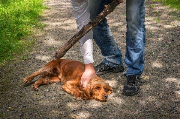棒を持つ男性と押さえつけられる犬