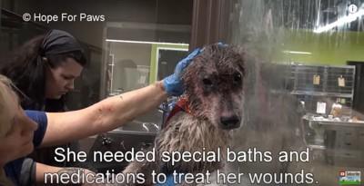薬湯で治療を受ける犬