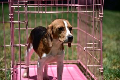檻の中に入った犬