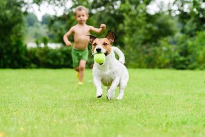 ボールをくわえて走る犬と男の子