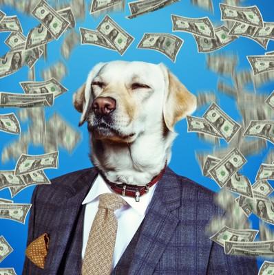 お金が舞う中でスーツを着た犬