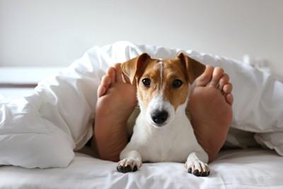 ベッドで寝ている飼い主の足元で寛ぐ犬