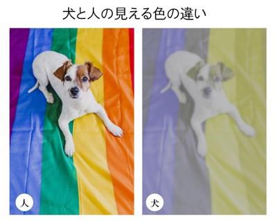 犬は色を見分ける視力が悪い