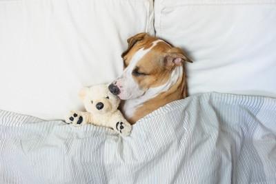 ぬいぐるみを抱きしめて眠る犬