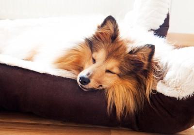 犬用ベッドで気持ち良さそうに眠る犬