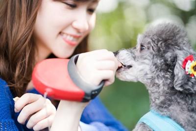 散歩中におやつを食べる犬