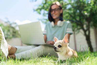仕事に夢中の女性と犬