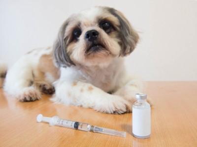 犬とワクチンと注射器