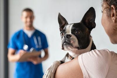 病院で飼い主に抱かれる犬と遠くで見守る獣医師
