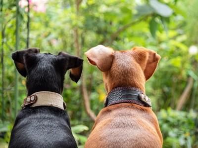 2匹で並ぶ犬の後ろ姿