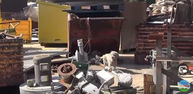 廃材置き場に立つ犬