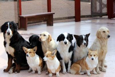 たくさんの犬たち