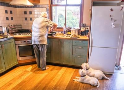 キッチンで伏せている犬