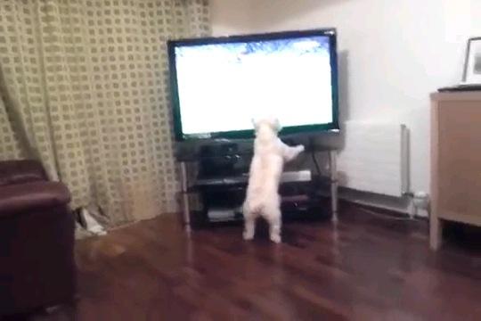 テレビの前に立つ犬