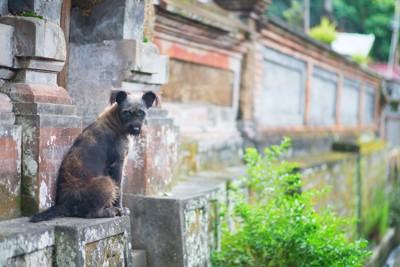 バリ島の寺院の犬