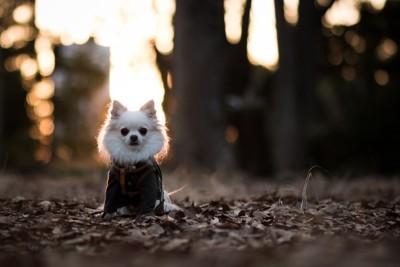枯葉の上に立つ犬