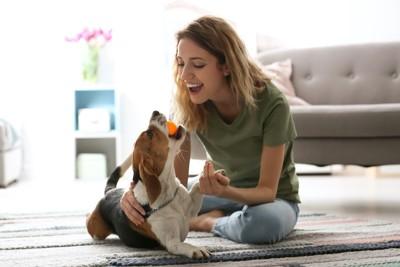 ボールをくわえる犬と一緒に遊ぶ女性