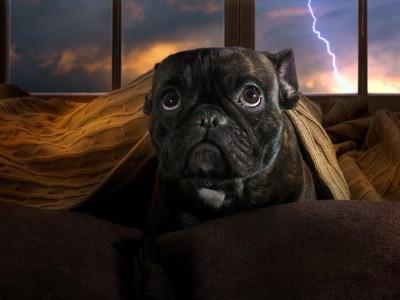 雷に不安そうな犬