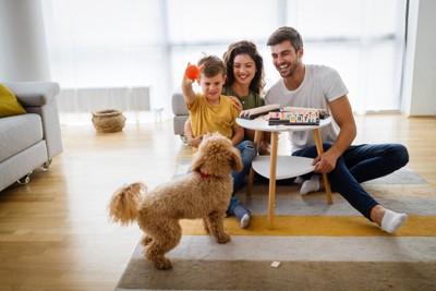 家族と室内で遊ぶ犬