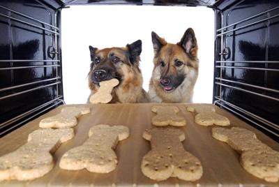 クッキー型のおやつを食べる犬