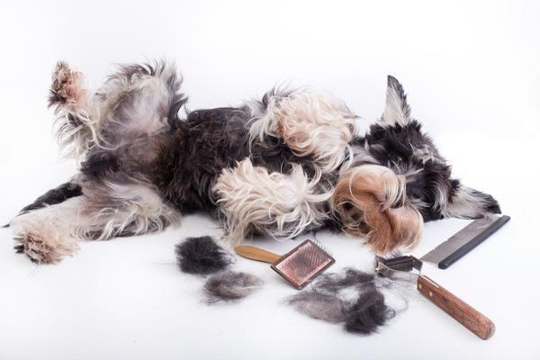 犬とカット用品