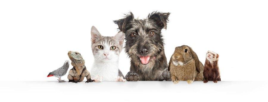 様々なペット動物
